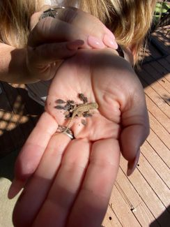 A woman's hand holding a baby lizard