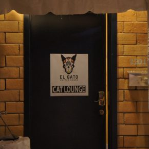 Cat Cafe: It's Coming