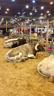 Petting-Zoo-Rodeo