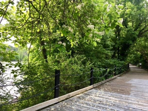 Mount Vernon Trail Gravelly Point