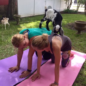 I Survived a Goat Yoga Class