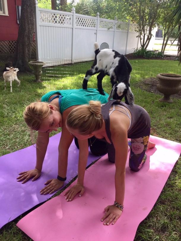 goat yoga houston