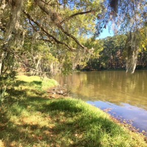 Houston Day Trip: Hiking Sam Houston National Forest