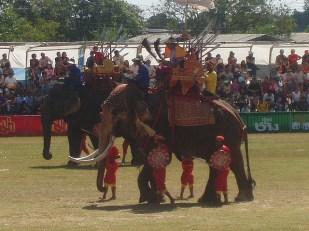 Шоу слонов в Сурине Таиланд