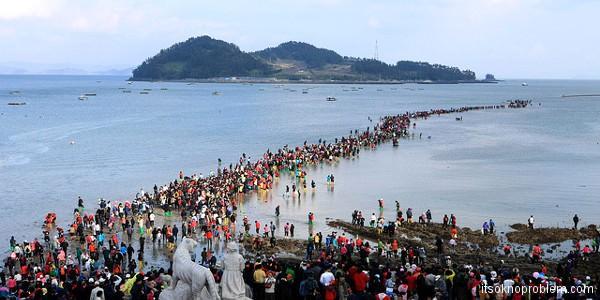 Фестиваль разделения моря на о.Чиндо, Ю.Корея