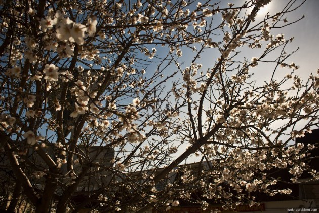 Crimean spring. Nature wakes up