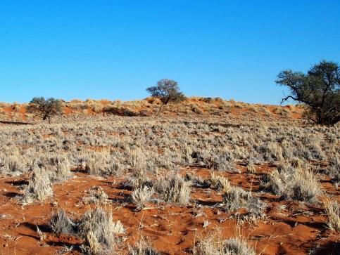 Namibia Namib Desert