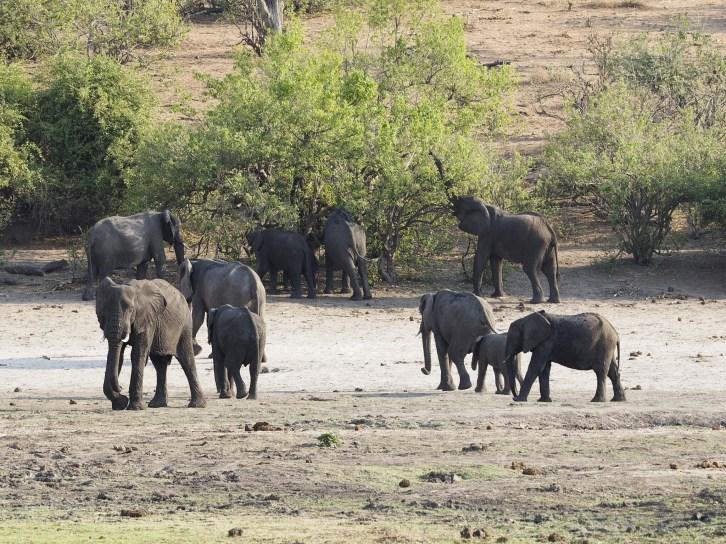 Botswana Chobe National Park