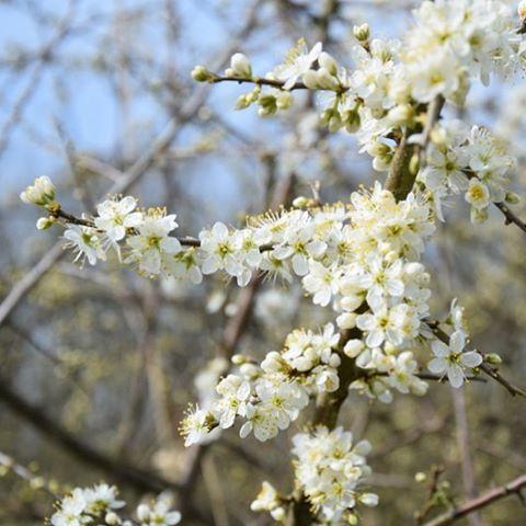 Morgen is het alweer april Wat is maart snel voorbijhellip