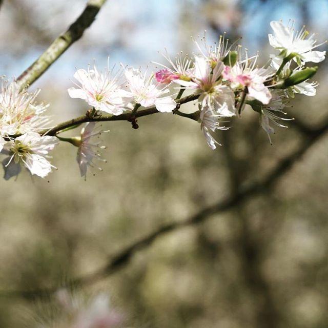 newcamera sony happy flowers