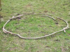 Branch circle