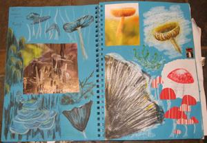 fungi sketches