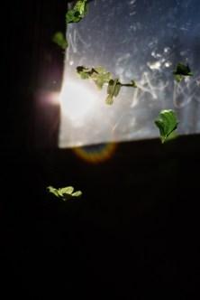2017-3-Green-Blog-5480