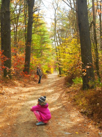 Copicut Woods - Fall River, Ma.