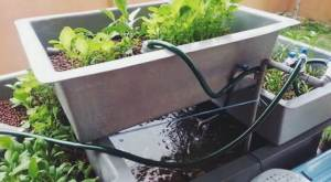 How-To-Build-A-Cheap-DIY-Backyard-Aquaponics