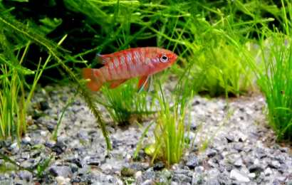 Aquarium Fish Species Profile-Part 1