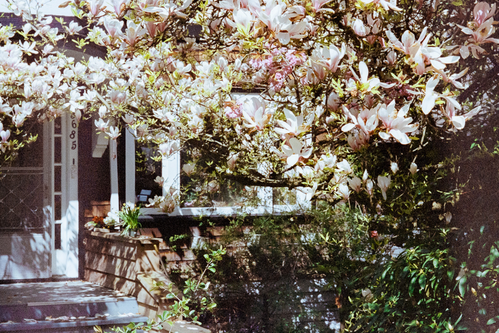 ITSUMO_West Vancouver_Spring_Magnolia Garden_Slider_2020-03