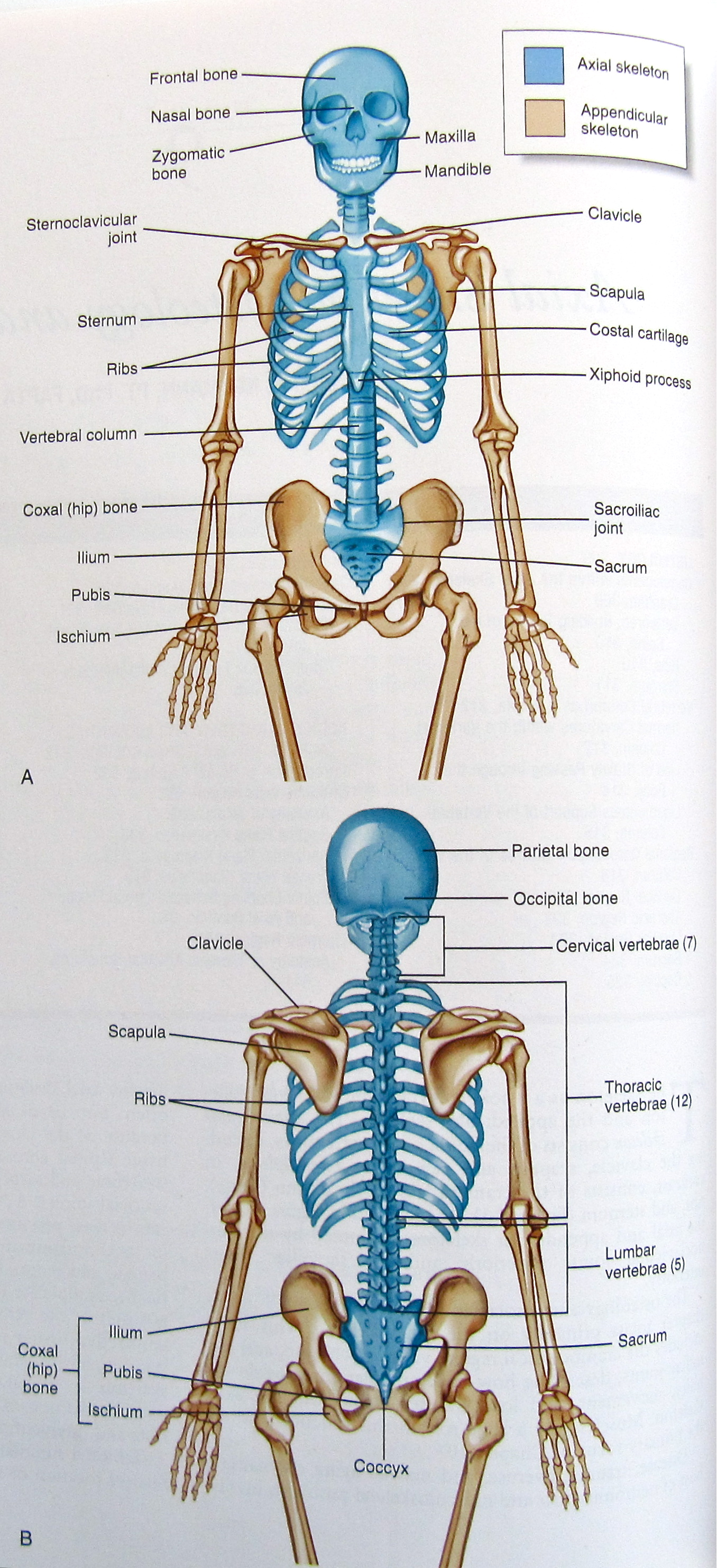 Search Anatomy And