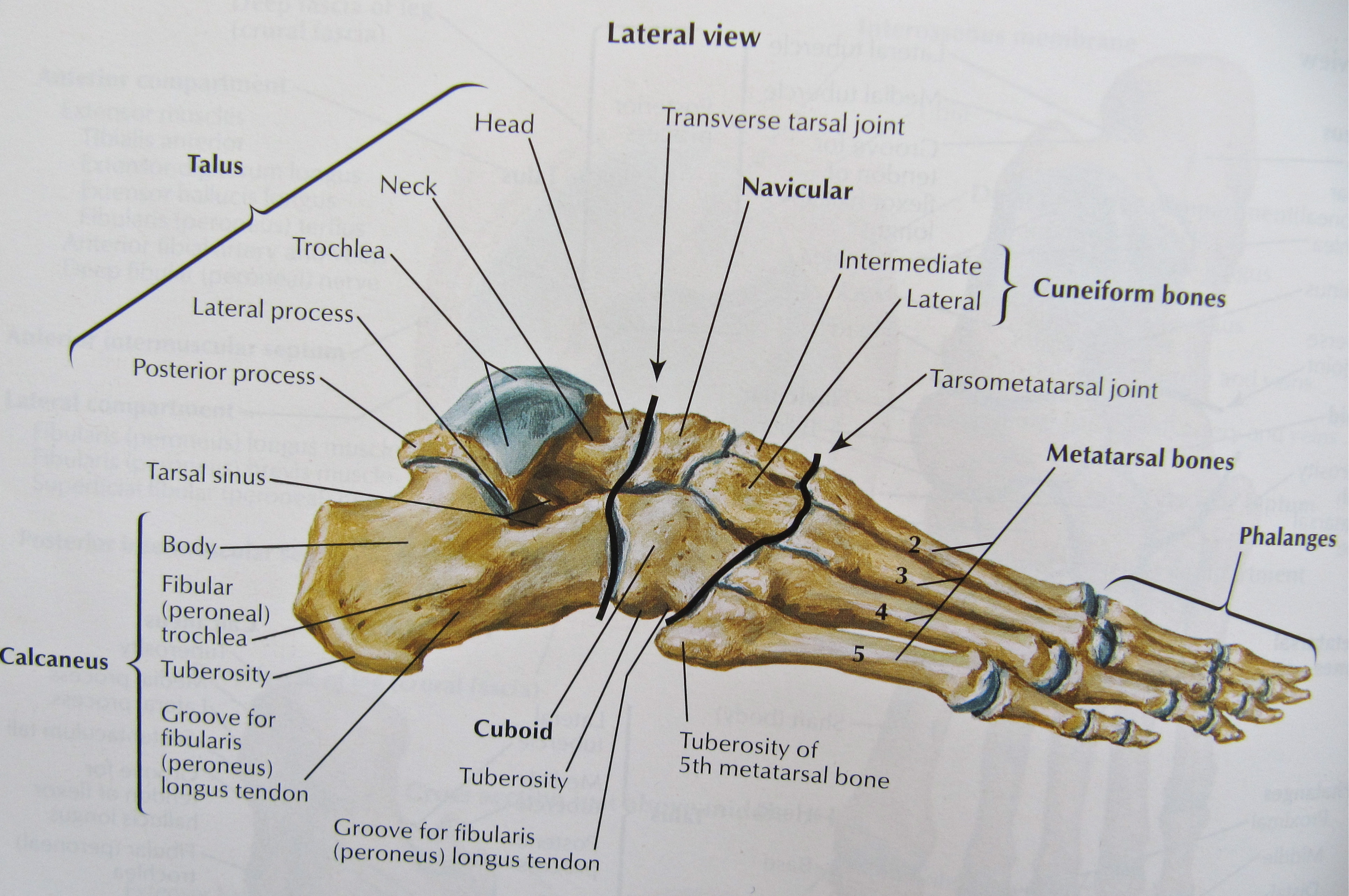 Notes On Anatomy And Physiology Using Imagery To Relax