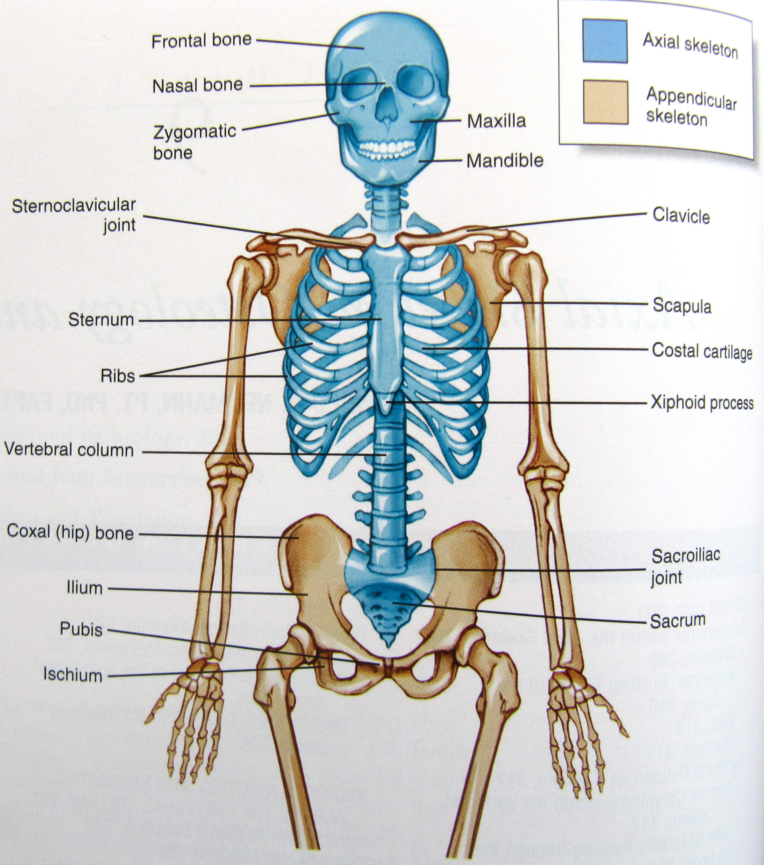 Images About Anatomy And Physiology
