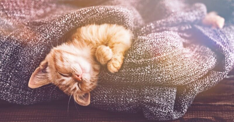 Cozy kitten is cozy