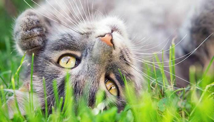 cat-summer-dangers-feat