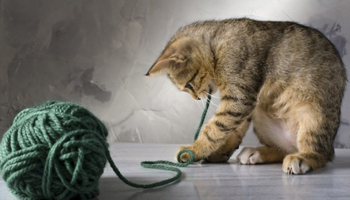 Shutterstock how string can kill a cat feat