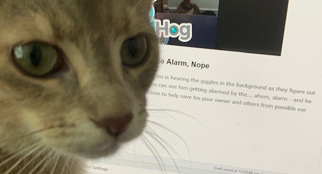 kitty trying to help