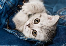 why do cats carry around clothes and laundry