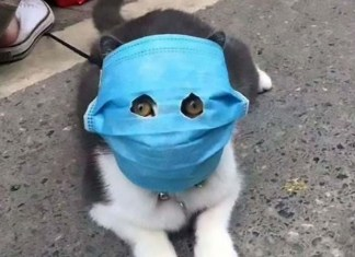 cat wearing coronavirus mask