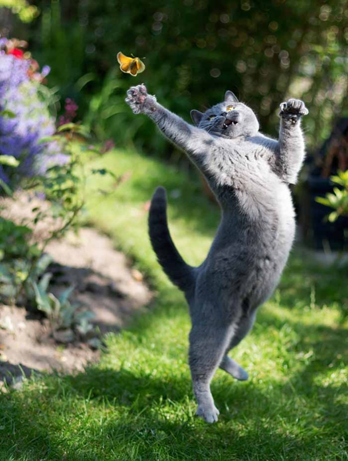 cat leaping to touch a butterfly leap day