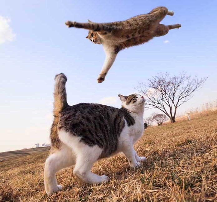 kitty leaps from the sky on another kitty leap day