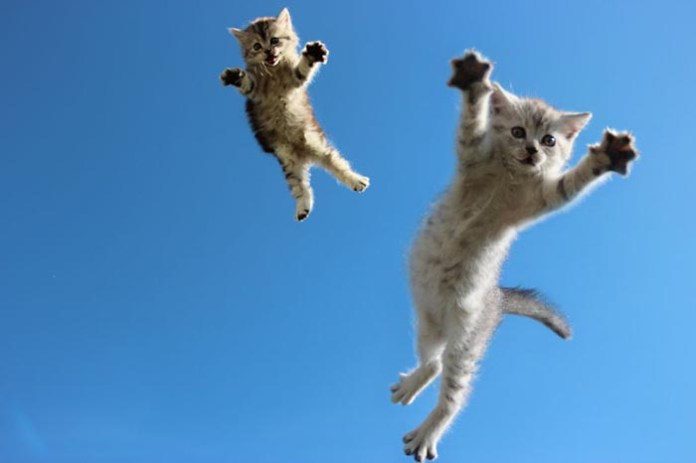 twin kitties leap into the sky leap day