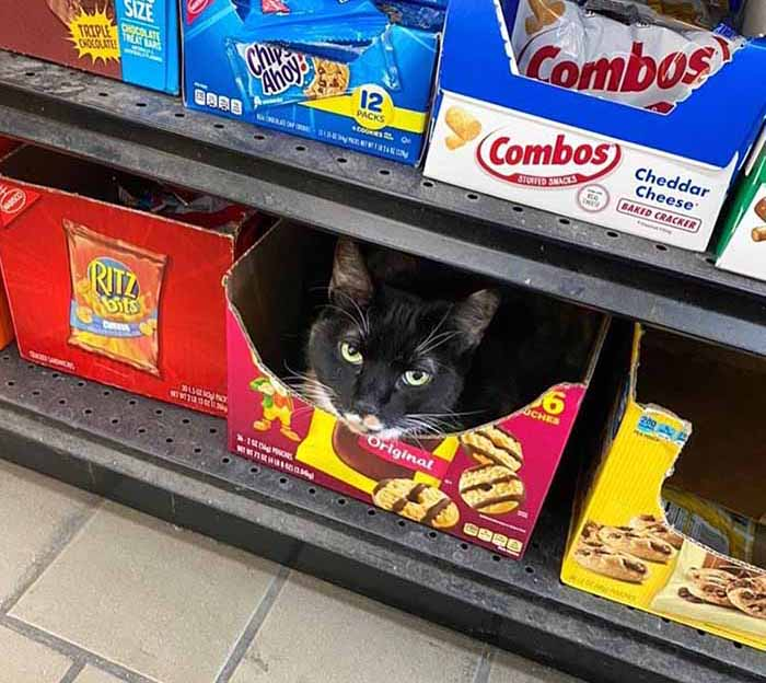 grocery store cat