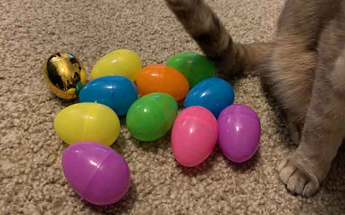 easter eggs and cat paw
