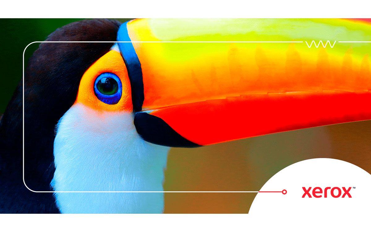 xerox-hace-accesible-los-colores-fluorescentes-para-todos