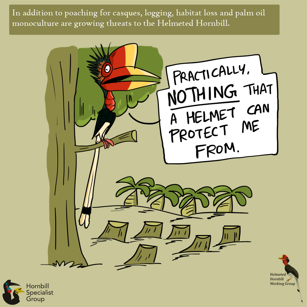 helmeted hornbill cartoons_web 10