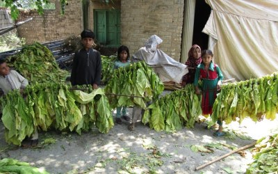eliminating child labour in agriculture needs guaranteed living wages, fair crop prices and freedom from debt