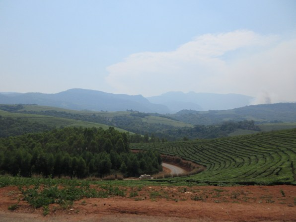 One of many beautiful views in the Honde Valley tea area.