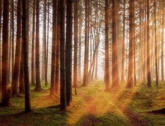 Hnutí Duha podporuje pálení biomasy