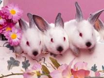 cute-bunnies-easter-wallpaper