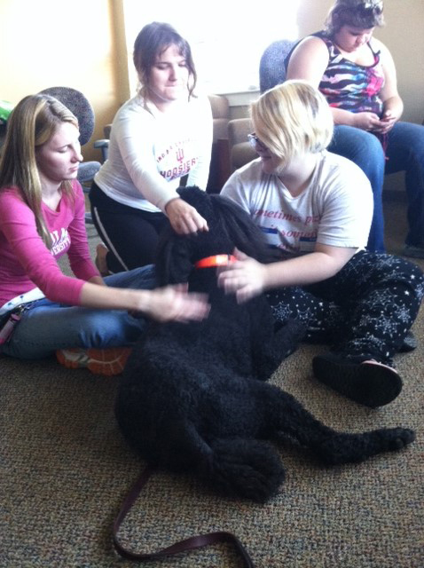 Students relax with Paris, a certified therapy dog. Preface Photo/TRICIA MCCANN