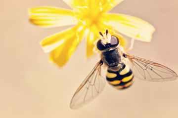 antenna bee bloom blossom