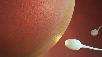 Μπορούν να δημιουργηθούν με ασφάλεια ανθρώπινα σπερματοζωάρια στο εργαστήριο;