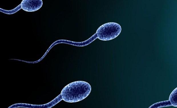 spermatozwaria