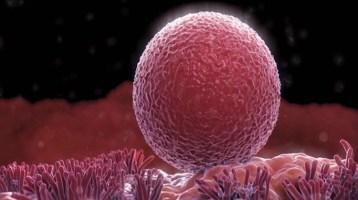Είναι δυνατόν οι γυναίκες να παράγουν νέα ωάρια;