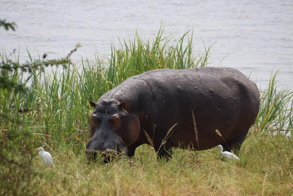 Rwanda Akagera National Park 3