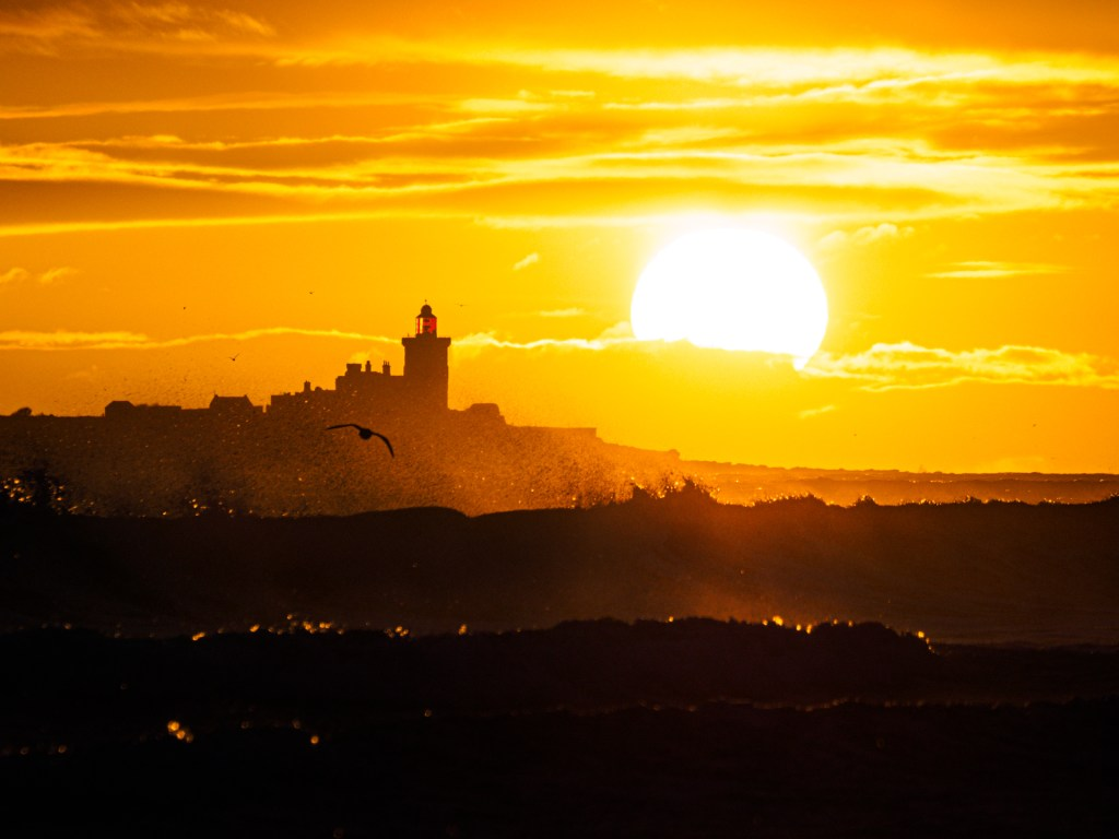 Golden sunrise over Coquet Island and a gull flying low over stormy sea.