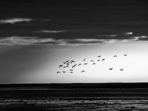 View of seagulls flying above the sea.