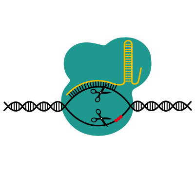 What in the name of science is CRISPR/Cas?